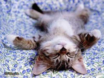 awwww! look at the cute kitten!