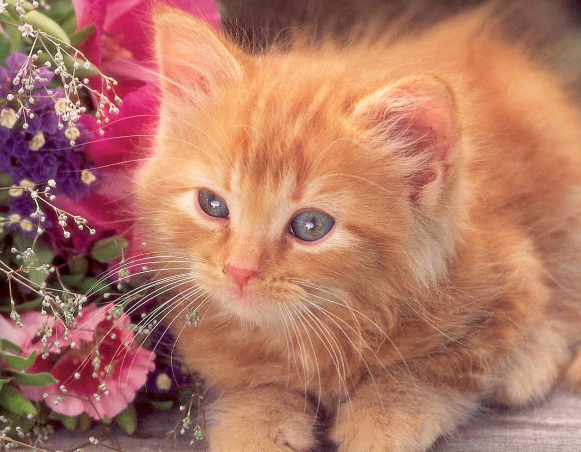 Kitty World: Cute Ginger Kitten