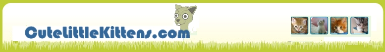 return to Cute Little Kittens HomePage